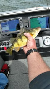 Leech Lake Perch Fishing