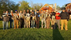 Great string of walleyes from 2016 opener.